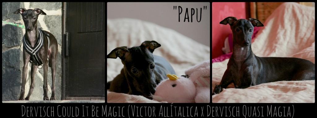 Papu 5 months
